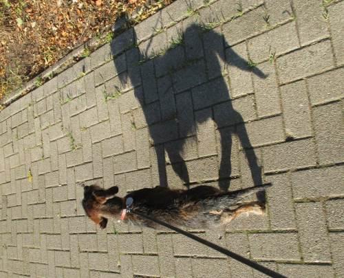 Aufmerksam auf Schritt und Tritt ist der schwarze Hund dabei.