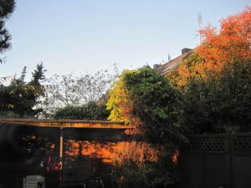 ... bunte Herbstfarben die Terrasse beleuchten, ...