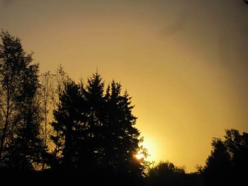 ... sich die Vögel zum Sonnenaufgang postionieren ...