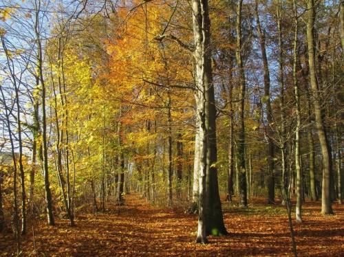 Der goldene Herbst ...