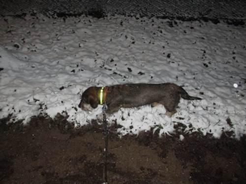 Socke von de Dreyster Drift, zur Sicherheit nun gelb reflektierend, schert das alles nicht. Im Schnee ist gut Fährtenlesen.