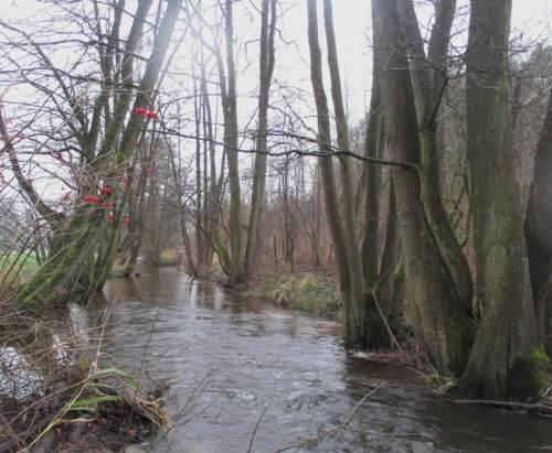 Der standorttypische Baumsaum zeigt bei Bächen und kleinen Flüssen Kronenschluss - Beachten grundlegender Fachlichkeit hilft so auch bei Anpassung an den Klimawandel.