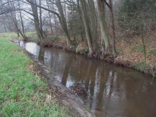 Einseitiger Erlensaum - allzu oft vorgetragenes falsches Ziel am Bach. Am unbebaumten Ufer sind Erosionszerstörung und damit Vernichten der turbulenten Bachdynamik durch Überbreite die Folge.