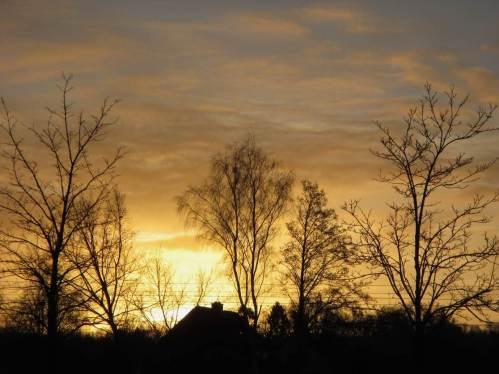 Baumkulissen zu Sonnenaufgang.