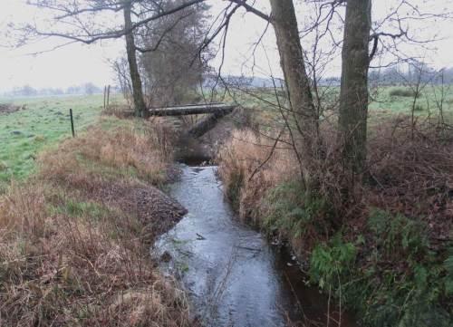 Kies- und Gerölldepots ermöglichen dem Bach nun, seine Sohle und Ufer selbst weiter zu strukturieren. Lebendige Strömung hilft.
