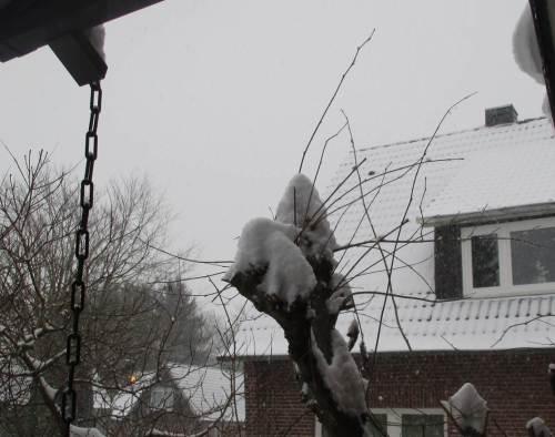 Morgendlicher Blick aus der Haustür - wie mit Zuckerhüten sind die Haselnussbüsche bedeckt.