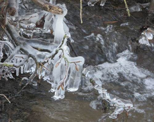 Eisglocken am Bendestorfer Mühlenbach.