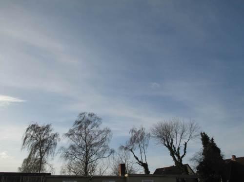 Unsere Sommerreifen liegen seit gestern in Wedel, auf baldigen Wechsel wartend. Foto: Baumkulisse am Gewerbegebiet.