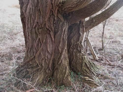 Vielfältige Altbäume - wertvoller Lebensraum für viele Arten.