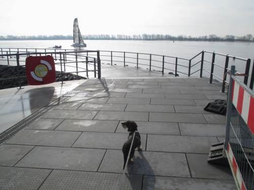 Socke von de Dreyster Drift vor Motor- und Segelboot auf der Elbe.