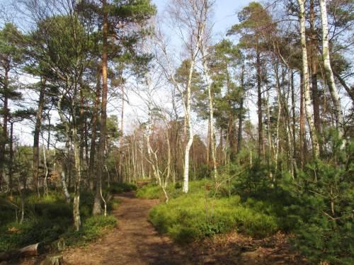 On Top zeigte sich lichter Mischwald mit Heide und Heidelbeeren.