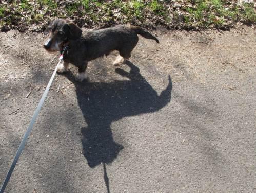 """Socke von de Dreyster Drift in Begleitung von """"Black Dog"""" am Rand des Tävsmoors."""