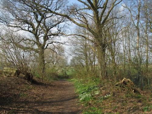 Frühling, Variante Buschwindröschen und Scharbockskraut, am Rand der Geest, direkt an der Marsch.