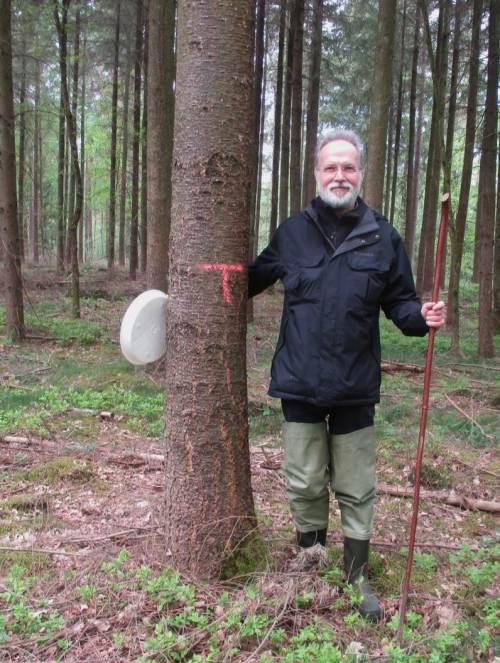 """Antwort auf eine regelhaft gestellte Frage bei Walddurchquerungen: Nein, die mit """"T"""" gekennzeichneten Bäume gehören nicht mir, dies ist nicht mein """"claim"""". T steht für so etwas wie """"track"""" - vielleicht einfach """"Trasse"""". Hier bewegen sich die modernen Holzgewinnungsmaschinen auf vorgegebenen Trassen zum Nutzholz, um möglichst wenig Schaden im Gelände anzurichten."""