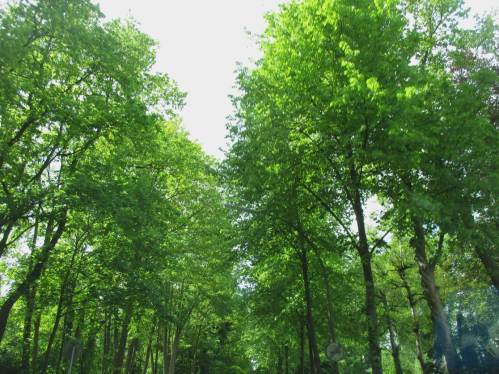 Geradezu als Beispiel für gesunde Gewässer mit lichtem Schatten unter Kronenschluss begleitender Bäume grüßt die Bundesstraßenallee den Heimkehrer.
