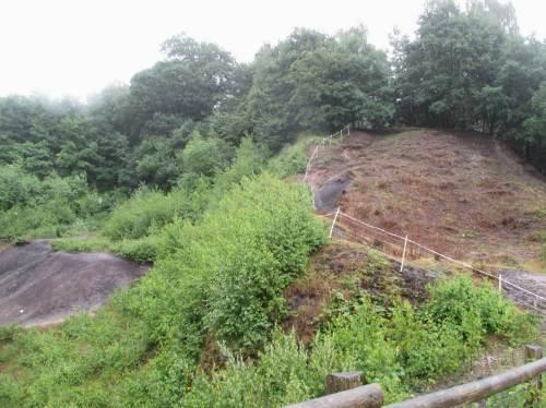 Pflanzensukzession schützt unsere Böden trefflich. Hier sollen aber Geo-Besonderheiten präsentiert werden. Scharfe Beweidung eignet sich für das Freihalten der wichtigen Flächen.