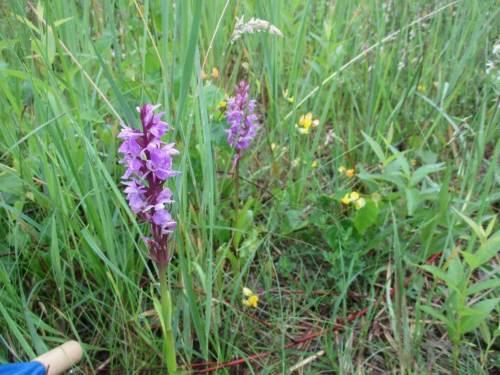 Das Offenhalten bringt nicht nur der Geologie, sondern auch Fauna und Flora die Möglichkeit, hier Besonderheiten zu präsentieren.