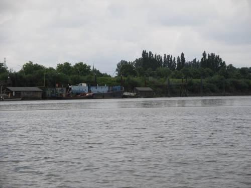 Der Spreehafen bei Tideniedrigwasser - da wächst wat - Süßwasserwatt ...