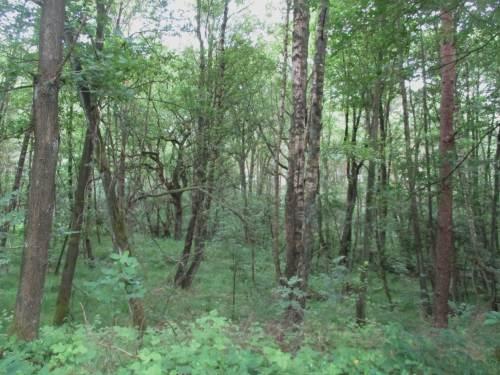 Entlang eines Moränenhangs, im tiefer Liegenden mit feuchtem Auwald bewachsen, verläuft die Schwindebeck-Aue.