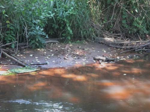 """Hier war also mein Freund Otter bzw. ist es - kenntlich am """"Otterscharrhaufen"""", mit dem er frei fallenden Sand kennzeichnet."""