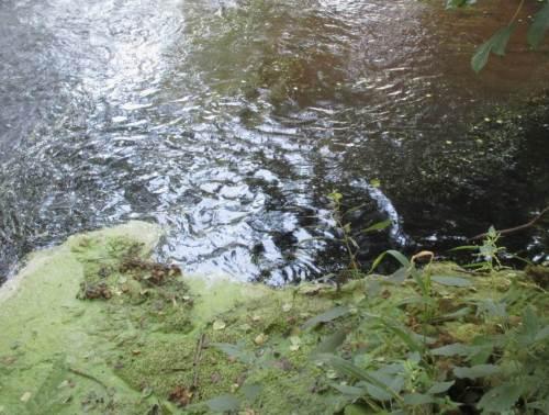 Wellenspiele, Schwarz- trifft Weisswasser, Entenflott.