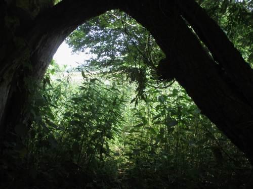 Ich liebe Strecken wie diese - hier findet der sommerkühle Bach mit seiner Lebensgemeinschaft durch naturnahe Auwald-Allee immerhin minimalen Schutz vor Überhitzung.