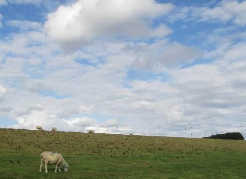 Und immer weiter ... - Schafe, Stare ...