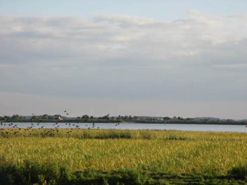 Der Schwarm fliegt zunächst flach, parallel zur Elbe.