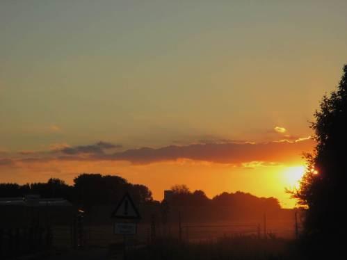 Jetzt steht die Sonne tiefer, mal sehen, ob etwas von den Staren zu sehen sein wird.