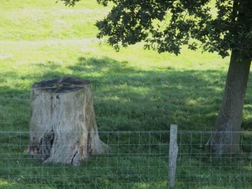 Leider ist fast überall festzustellen, dass über Jahrzehnte der Ersatz von Baumriesen geradezu verhindert wurde - hier immerhin ein gutes Beispiel, jüngere Bäume spenden bereits (wieder) Schatten.