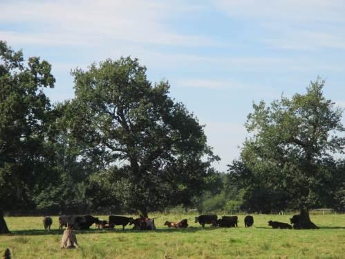 Ein Schattenbaum, am besten eine Gruppe von Altbäumen wie hier, sehr gefragte Plätze bei hitzigem Wetter.