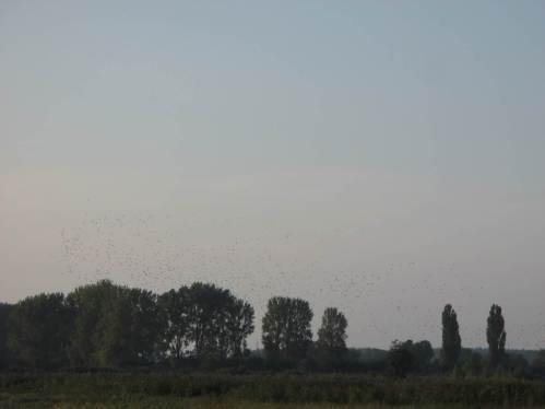Vereinte Schwärme sausen Richtung Horizont.