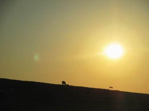 Schaf und Bank auf Deichhorizont in der Abendsonne - heute bleibe ich binnendeichs.