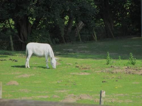 Der weisse Esel allerdings bleibt in der Sonne - weiss er um seine Albedo, strahlt er womöglich mehr ab, als er an Energie bekommt - wir wissen es nicht.