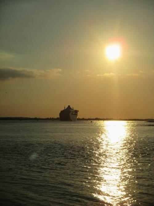 Für solch ein Vogel-Schauspiel lassen wir sogar die Queen Mary 2 ohne uns den Schulauer Hafen passieren - gucken halt hinterher.