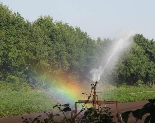 Man glaubt es nicht! Wasserverschwendung mit unangepasster Technik und Beregnung zur heissesten Mittagszeit! Wird dafür wenigstens, messend, eine Abgabe fällig?!