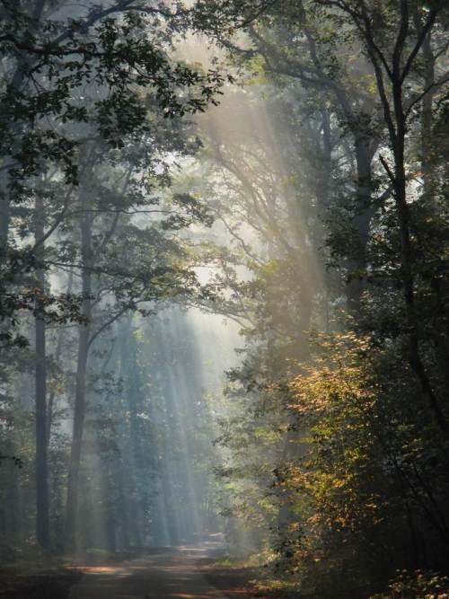 Da sieht es im Wald doch bei Gegenlicht gleich ganz idyllisch aus ...