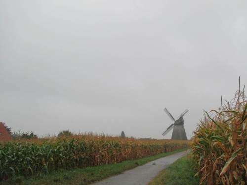 Arme, alte Windmühle Bierde - Kulturdenkmal in fehlsubventionierter, eintöniger Maislandschaft.