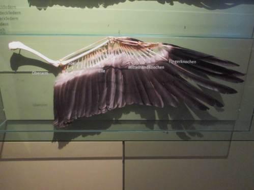 Schon beeindruckend, was sich die Natur so ausgedacht hat, einen Großvogel in die Luft zu bringen.