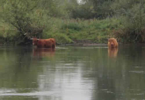 Wie Braunbären stehen sie mit der Strömung (und gucken aufwandernden Lachsen entgegen). - Teufel auch, jetzt ist die Phantasie aber mit mir durchgegangen.