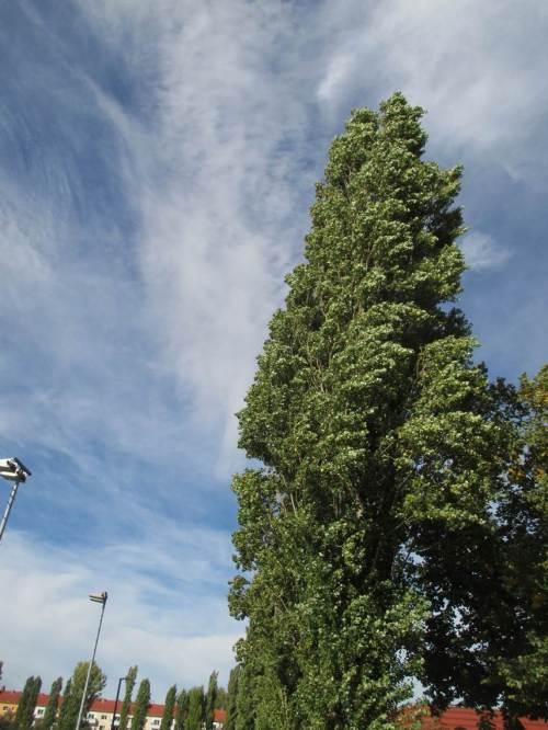 Bei solch Wetter und Temperatur lässt sich der starke Wind ertragen.