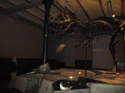 VORSICHT, T. rex voraus!