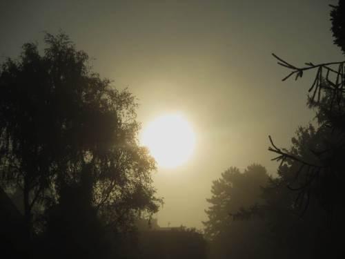 """Wird die Sonne den Nebel """"wegdampfen"""", oder wird Hochnebel den Tag bestimmen?"""