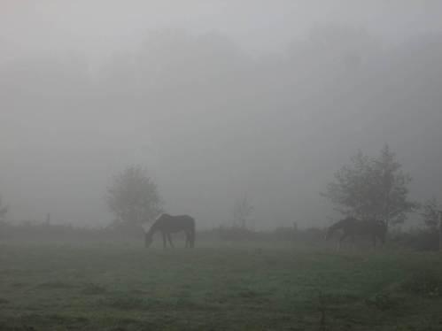 Pferde im Morgennebel.