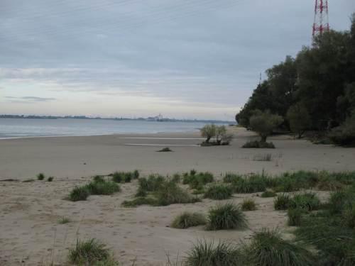 Wie überall an der seeschifftiefen Elbe muss auch hier aufgrund veränderten Tidegeschehens und Wellenschlags erheblicher Sandverlust am Ufer festgestellt werden.