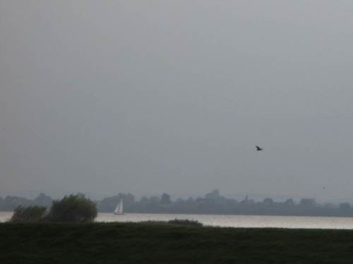 Ein Segelboot und ein Graureiher ziehen vorbei.