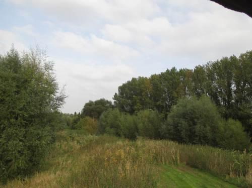 Blick binnendeichs auf einen kleinen Auwaldrest im Gelände des Wassererlebniszentrums.