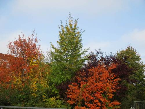 Bunte Vielfalt im Gartengrün unseres Fuß- und Radwegdurchzogenen Wohnumfelds.