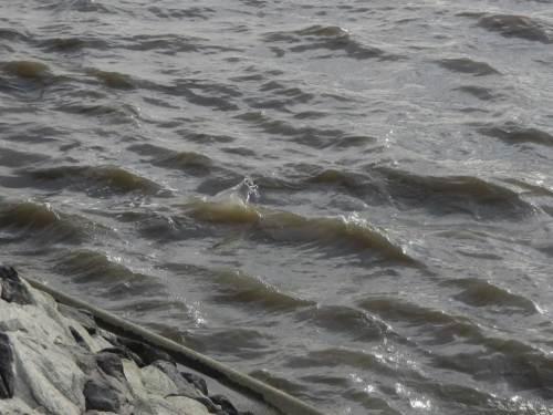 Plitsch, Platsch - an der Elbe steht der Wind wieder einmal gegen die Fliessrichtung.