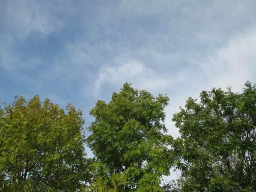 Die Eschen halten noch durch - diverse Grünstufungen.